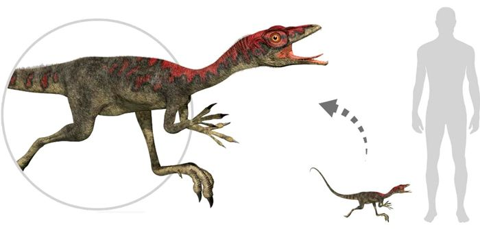 Compsognathus (Compsognathidae). By Linda Bucklin | Shutterstock.com