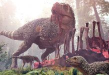 Tyrannosaurus Rex and its young feeding on an Alamosaurus carcass in Hell Creek 66 million years ago. By Herschel Hoffmeyer | Shutterstock.com