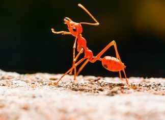 Ant. By Balkhi | Shutterstock.com