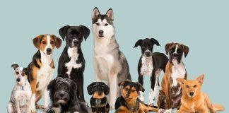 8 questions to test your knowledge about dogs