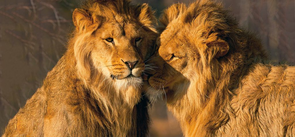Are there gay animals in nature? Homosexuality in the animal