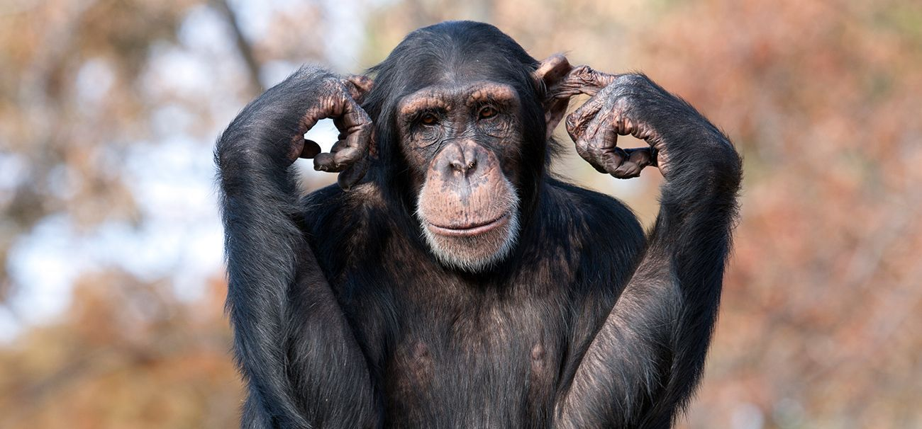 Animal intelligence: the smartest animal species in the world