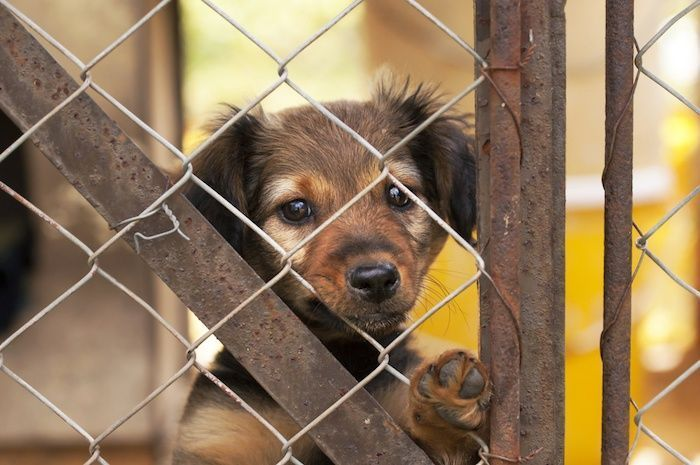 Lonely dog puppy looking behind a fence. By Reddogs | Shutterstock.com