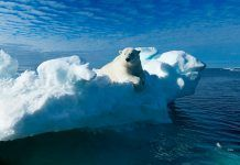 A polar bear sitting on the edge of an ice floe in the Svalbard Archipelago. By Ritesh Chaudhary | Shutterstock.com