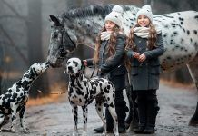Twins sisters with Appaloosa horse and Dalmatian dogs in rainy autumn park. By Julia Shepeleva   Shutterstock.com