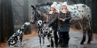 Twins sisters with Appaloosa horse and Dalmatian dogs in rainy autumn park. By Julia Shepeleva | Shutterstock.com