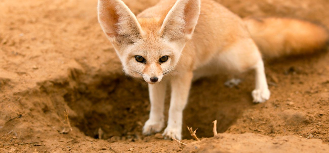 Too hot? Too cold? How animals survive in extreme temperatures