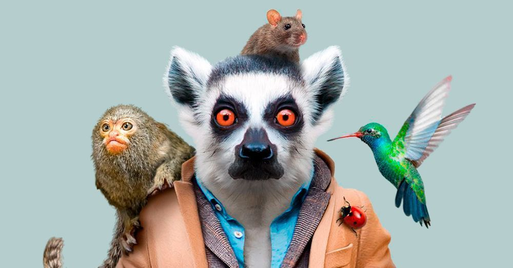Zoo Portraits. Pictures, facts and curiosities about animals.