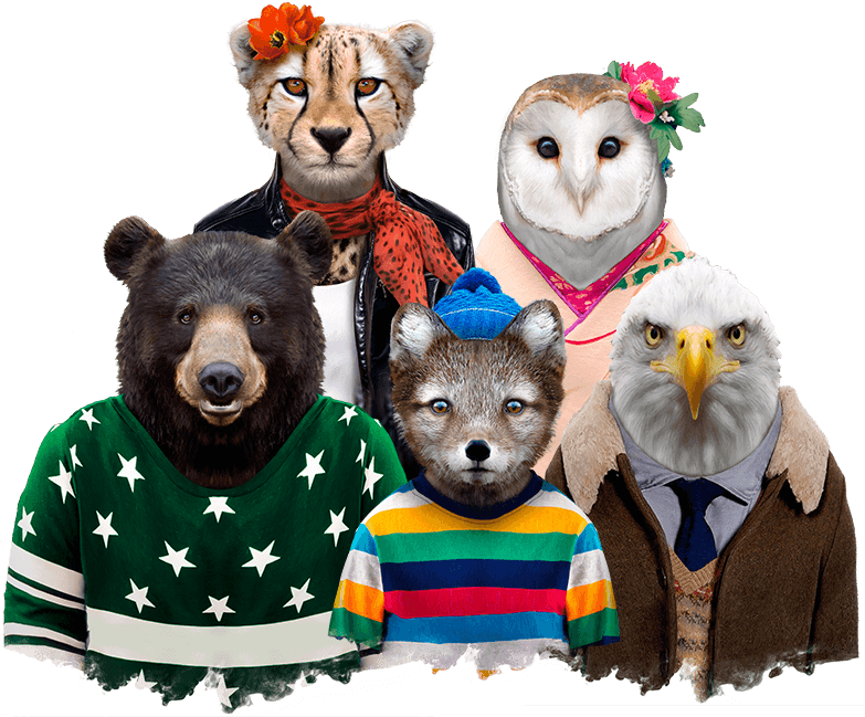 Zoo Portraits - Bear, Cheetah, Barn Owl, Arctic Fox and Bald Eagle