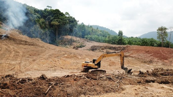 Deforestation. Environmental destruction of rainforest. Borneo forest destroyed for oil palm plantations. By Rich Carey | Shutterstock.com