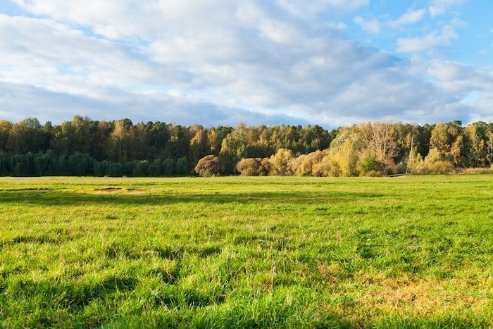 Green grass on autumn forest border in sunny afternoon. By vvoe | Shutterstock.com