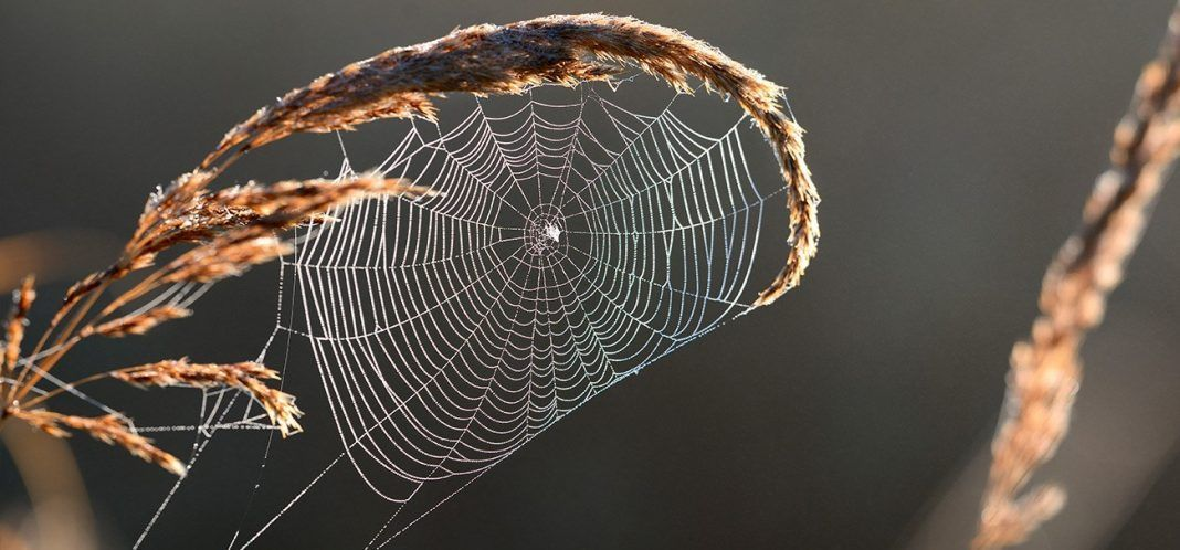 Beautiful spider web with water drops close-up. By Aleksey Stemmer | Shutterstock.com