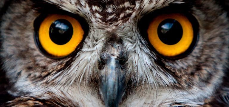Zoo Portraits Pictures Of Animal Species And Curiosities About The