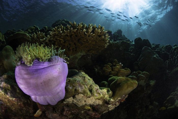 Marine invertebrate species are the most affected by over-exploitation. By Milos Prelevic