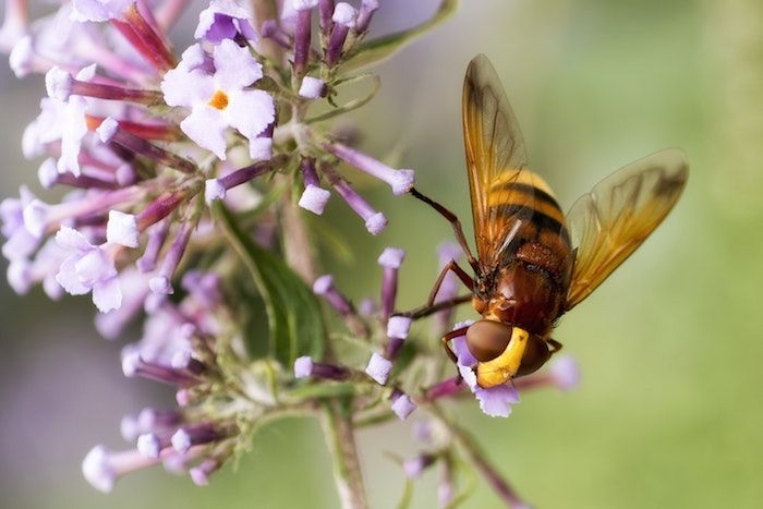 Many invertebrates are involved in key processes such as pollination. By Jan Meeus